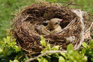 鳥の巣のイメージ